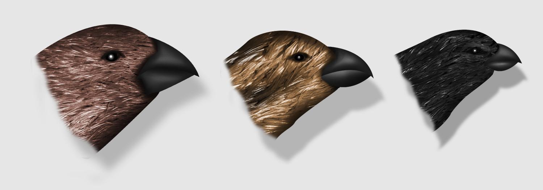 finches composite-01